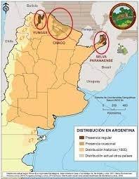 Fuente: Fundación Vida Silvestre https://www.vidasilvestre.org.ar/nuestro_trabajo/que_hacemos/nuestra_solucion/cambiar_forma_vivimos/conducta_responsable/bosques/yaguarete/conociendo/