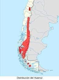 https://www.vidasilvestre.org.ar/nuestro_trabajo/concientizacion_y_educacion/campanas/dia_del_medio_ambiente/dia_del_medio_ambiente/ecorregiones/bosques_patagonicos/