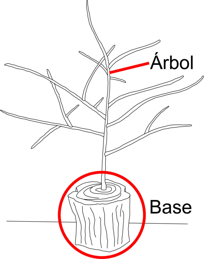Arbol base