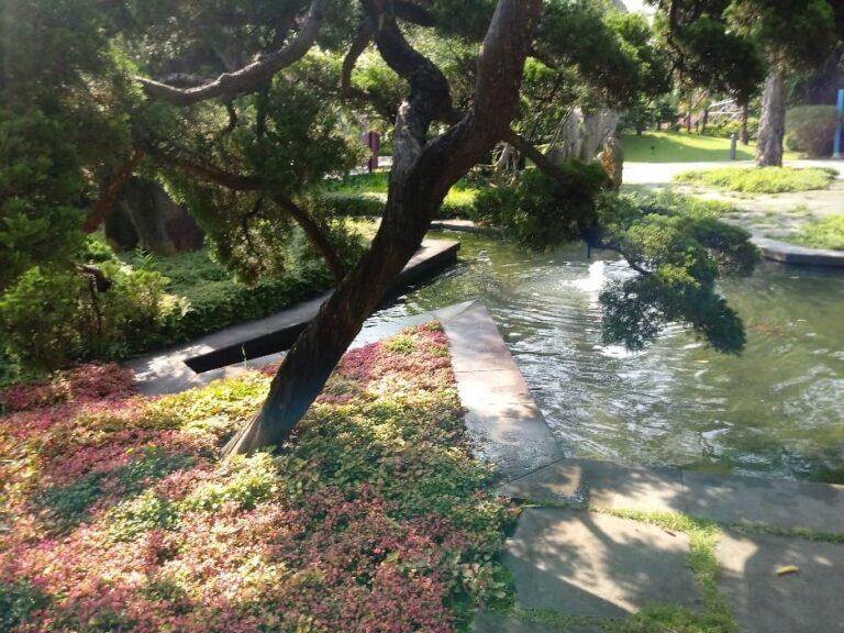 Fotos de 'rincones' del Jardín Botánico de Singapur. Pueden observarse las texturas de plantas como de solados, el juego del agua, esculturas. Cada rincón tiene un efecto especial de protección.